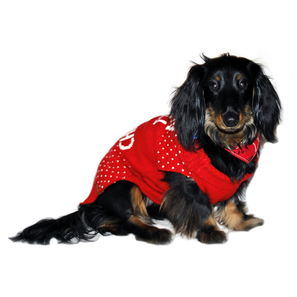 filthy-animal-dog-sweater